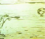 外壁塗装、屋根塗装 株式会社マルゼン工業(市川市|江戸川区|葛飾区)